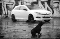 Opel Astra GTC Black&White