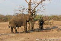 Malavi I. del